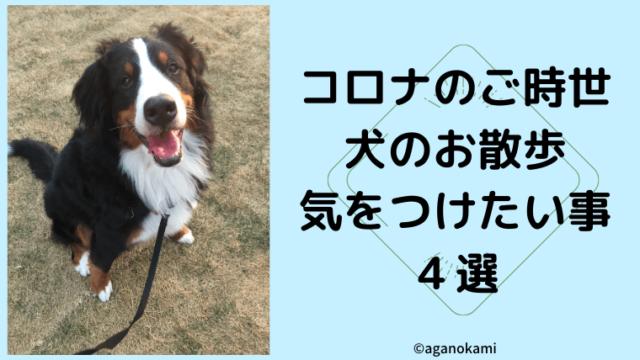 コロナ時代の犬のお散歩