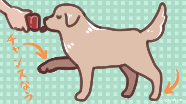 コングを舐める犬のイラスト