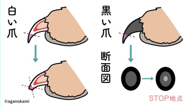 犬の爪の切り方