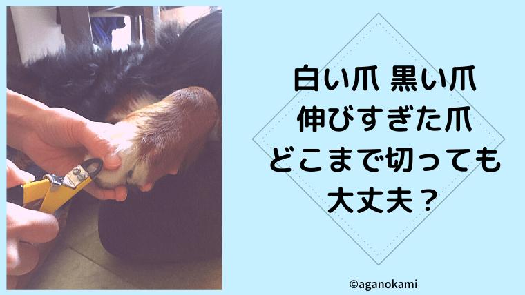 犬の爪切りを解説