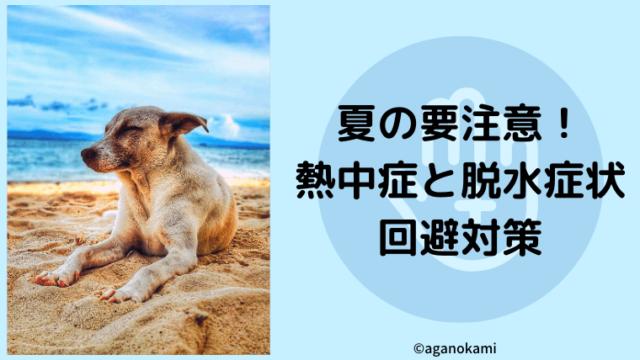 犬の熱中症と脱水症状の対策