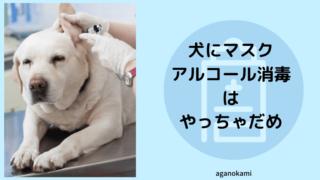 犬用マスクと犬にアルコールは使ってはいけない