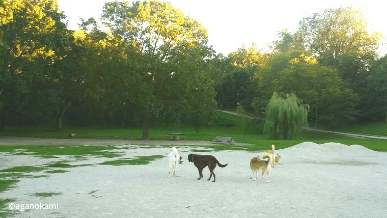 公園で遊ぶ犬たち