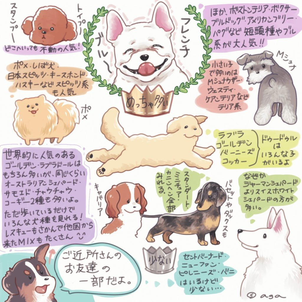 トロントに多い犬種たち