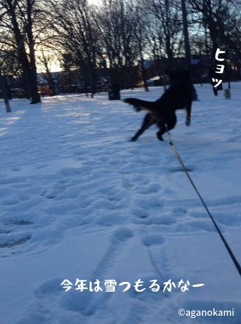 雪ではしゃぐ犬