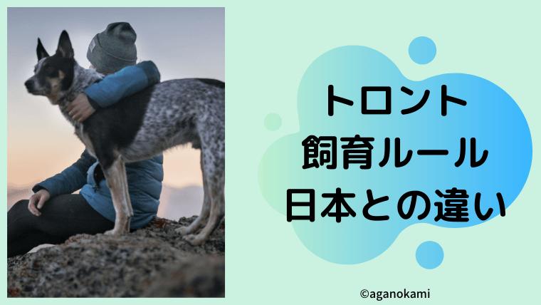 トロント犬の飼育ルール
