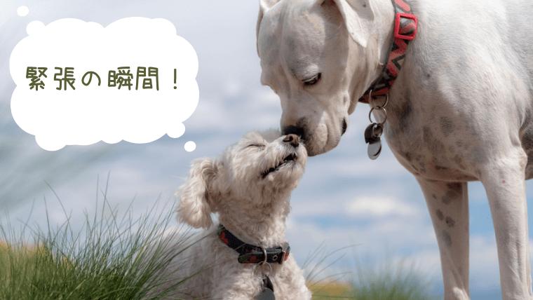 挨拶する2匹の犬
