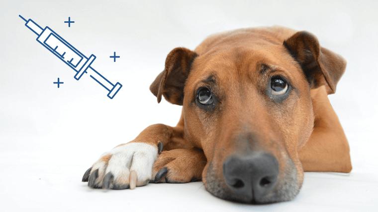 予防注射と犬