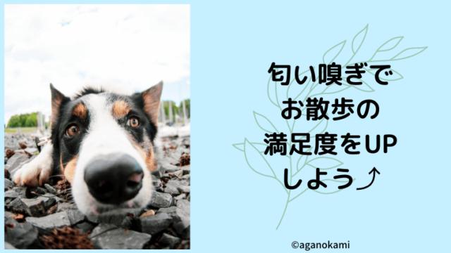 犬の散歩は匂い嗅ぎで満足度up