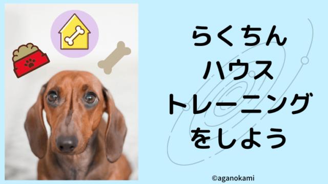 犬の楽なハウストレーニングをしよう