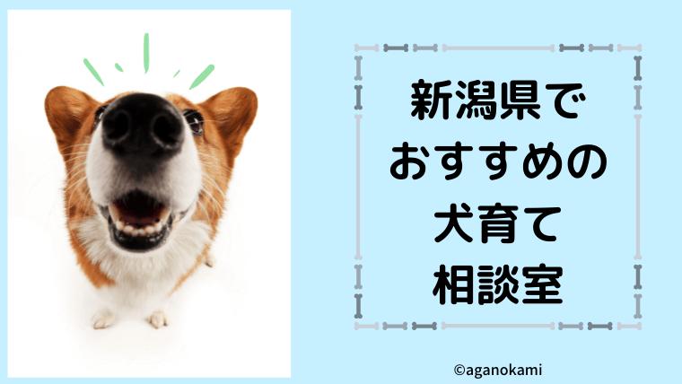 新潟県でおすすめの犬の相談室