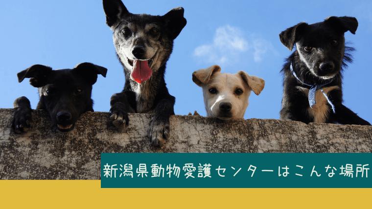 新潟県動物愛護センターの紹介
