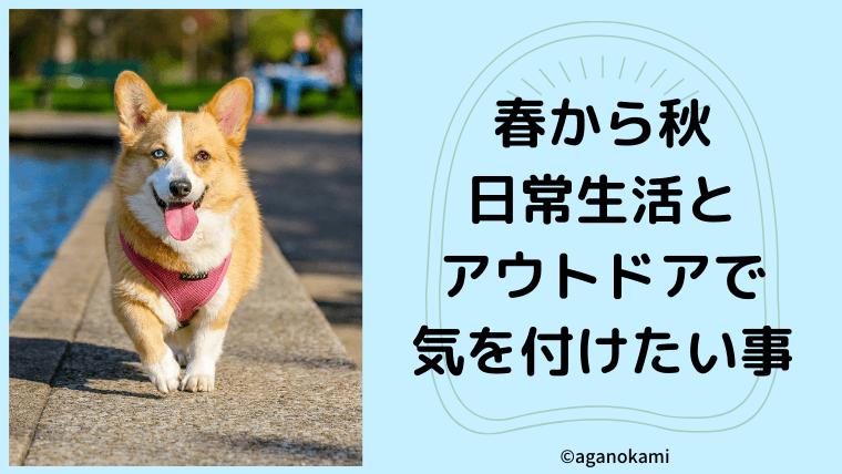 春から秋にかけて犬の飼い主さんが気をつける事