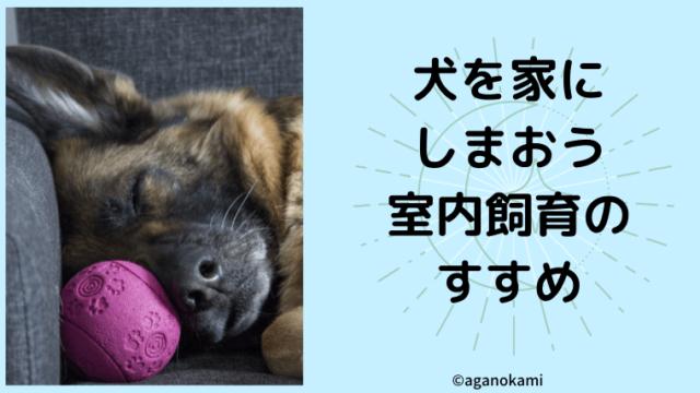室内飼育が適正な飼育方法