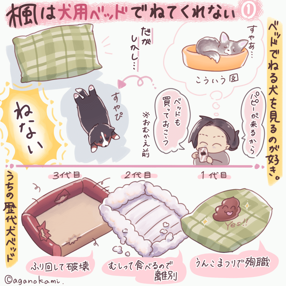 ベッドで寝ないバーニーズ漫画1