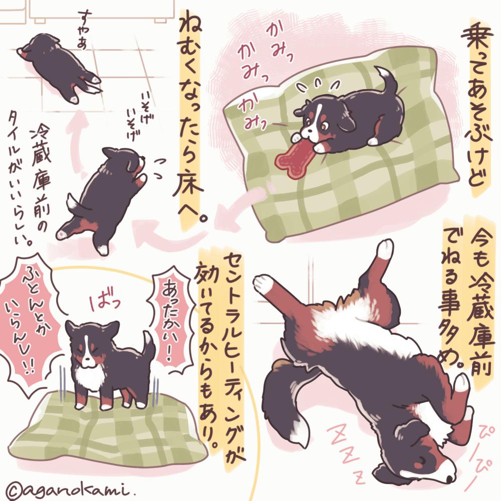 ベッドで寝ないバーニーズ漫画2
