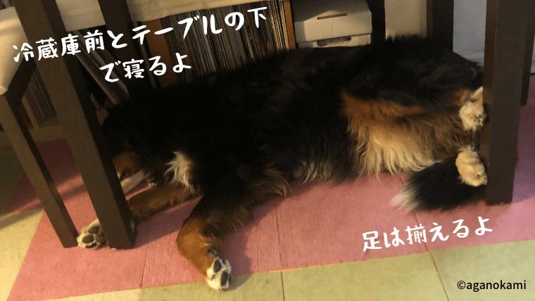 テーブルの下で寝る犬