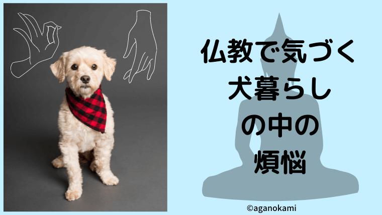 仏教で気づく犬暮らしの中の煩悩